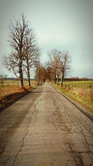 Road Walking Around Trees Sun Relaxing Walking Alone... Countryside Village Life