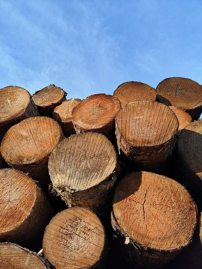 EyeEm Selects Stack Pattern Textured  Timber Full Frame Sky Close-up Forestry Industry Tree Ring Pile Firewood Lumber Industry Woodpile Tree Stump