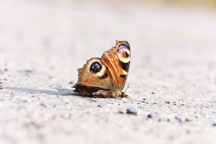 Close-Up Of Dead Butterfly On Ground