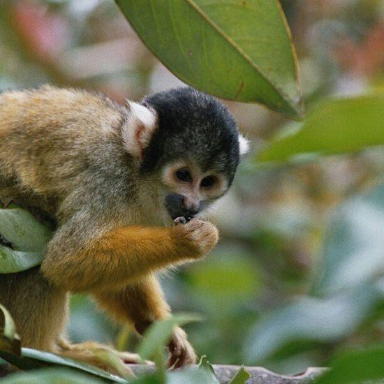 #ape #animal #zoo Monkey Animal Zoo Ape SLR Nofilter Canonae1program Canonae1 Skullmonkey
