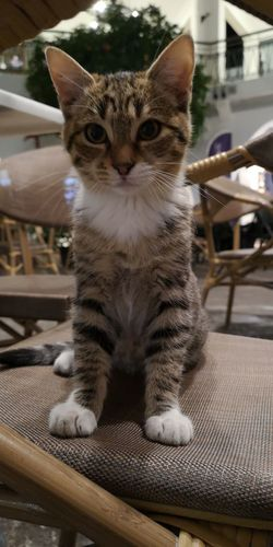 Cats Cat♡ Cats