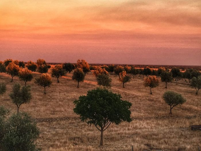Torrão Nature Tree Beauty In Nature Landscape Tranquility Scenics Tranquil Scene Sunset Growth Field Outdoors No People Plant Sky Agriculture Grass Day EyeEm Best Shots Tourism Travel Destinations Eye4photography  The Week On EyeEm Building Exterior