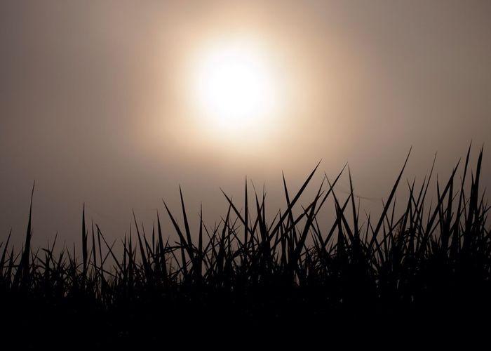 morning Sky Sun