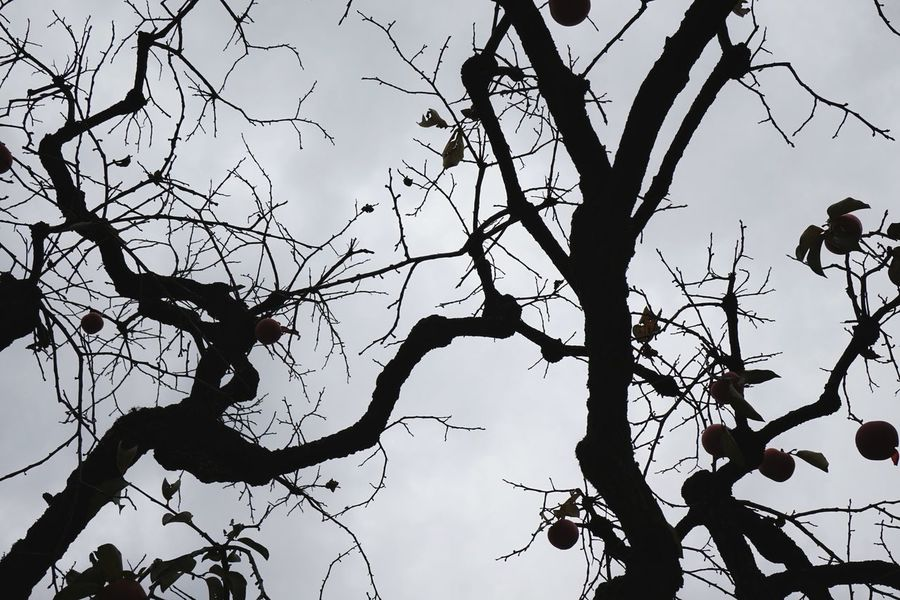 | Orto Botanico | darkness and light EyeEm Italy Black And White Orto Botanico Padova Bird Tree Branch Leaf Silhouette Vulture Autumn Sky Animal Themes Bare Tree Dead Plant A New Perspective On Life Holiday Moments Capture Tomorrow