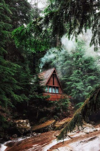 Tree Nature House In Trees Outdoors 🌲🌳🌴🍀🍃