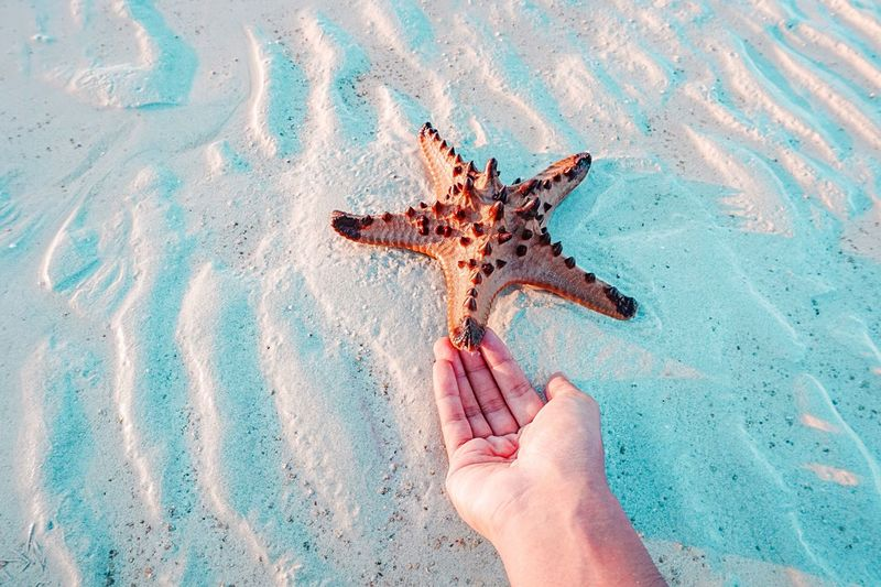 Got a star ⭐️ Hands At Work Starfish  Human Body Part Sand Human Hand One Animal Animal Themes One Person Beach Animals In The Wild Sea Life Animal Wildlife Day Outdoors Real People Nature People Close-up Adult Adults Only