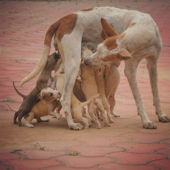 Mothers hold their children's hands for a short while, but their hearts forever.. Gagans_photography Instalove Mothers Love Loveforher Dog Love Pet Instachandigarh