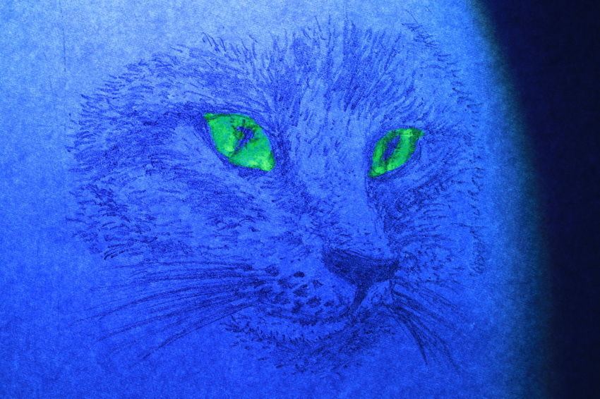 The face of cat wrote by pencil on white paper in blue light 4legs Diamond Eyes  Portraits Rat Textures Animal Themes Black And White Blue Cat Close-up Cute Day Fur Ideas Lazy Animal Looking At Camera Mammal No People One Animal Outdoors Paper Pencil Drawing Pets Portrait Texture
