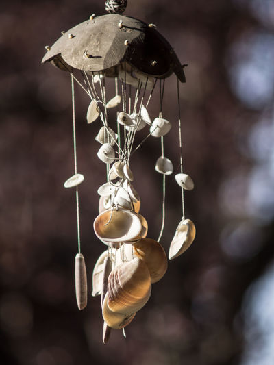 Focus On Foreground Hanging Close-up No People Lighting Equipment Animal Day Animal Wildlife Creativity Decoration Animal Themes Still Life Nature Outdoors Wind Chime Art And Craft Shell Animal Shell Ornate