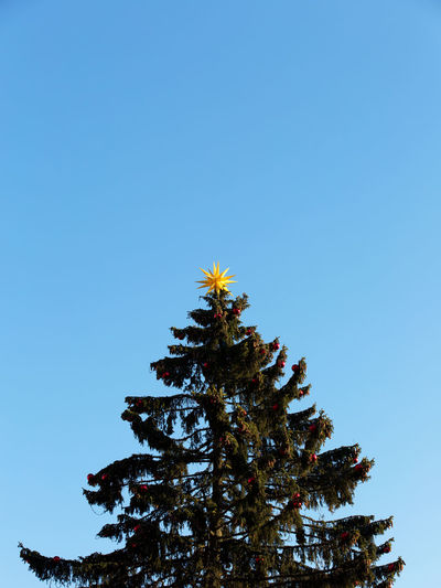 Sky Tree Plant Low Angle View Clear Sky No People Growth Beauty In Nature Blue Nature Copy Space Tranquility Day Outdoors Scenics - Nature Branch Green Color Treetop Tranquil Scene Sunlight Coniferous Tree christmas tree Star Christmas Christmas Decoration