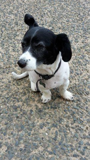 Animal Themes Black & White Blackandwhite Day Dog Domestic Animals No People One Animal Outdoors Pets Ugo