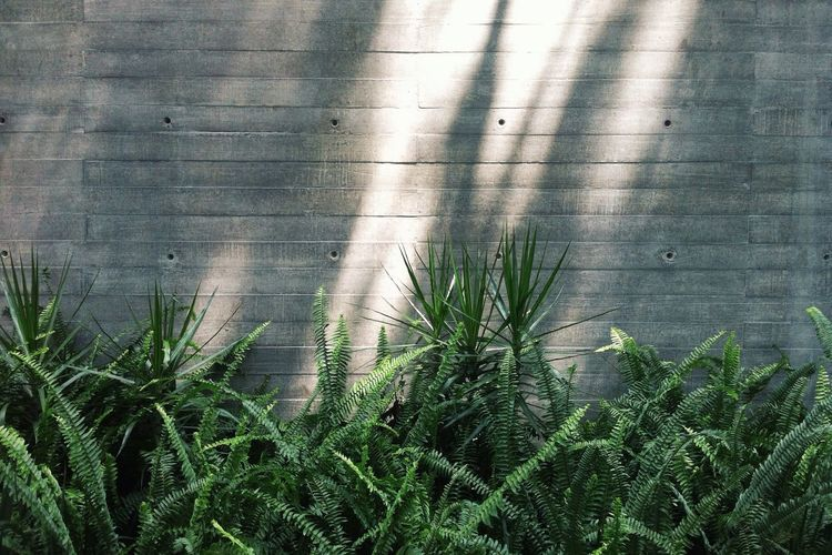 Plants Growing Against Wall