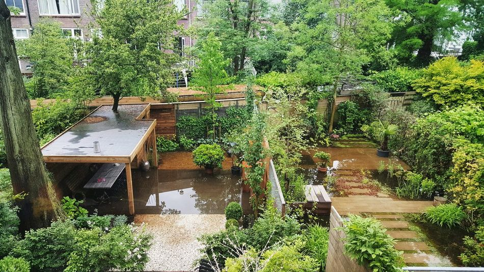 Hugging A Tree Swimming Rain Rainy Days Raindrops Pool Pool Time Extreme Weather Climate Climate Change Climate Change(global Warming) Garden Garden Photography Garden Architecture Flood Flooding Flooded Green Green Green Green!  Green Nature Trees Plants Bushes Bushes And Trees Summer In The City