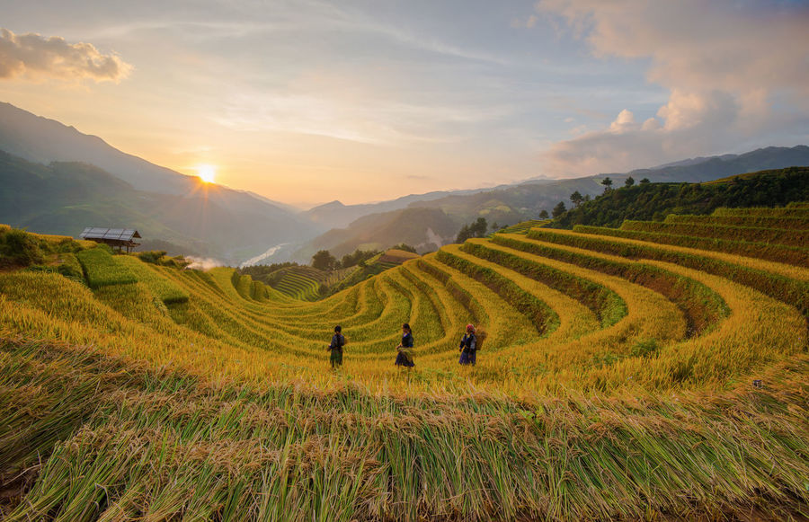 Sunset in Vienam. Benro Filter GND Filter Mu Cang Chai Beauty Rice Field Natural Beauty Nikon Vietnam Photos Quan Hoang Photography Rice Paddy Vietnam Vietnamese Yen Bai Vietnam Beauty In Nature Beauty Mountain Farm Farmer Field Go Home Landscape Long Exposure Mu Cang Chai - Yen Bai Nature People Rice Field Skyscraper Sunset Vietnam Travel