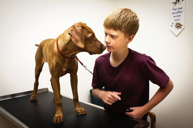 Trip To The Vet Lifestyle Country Life Veterinarian Puppy Dog Dogs Pointerdog Vizsla Mountain Life Real Moments Real People