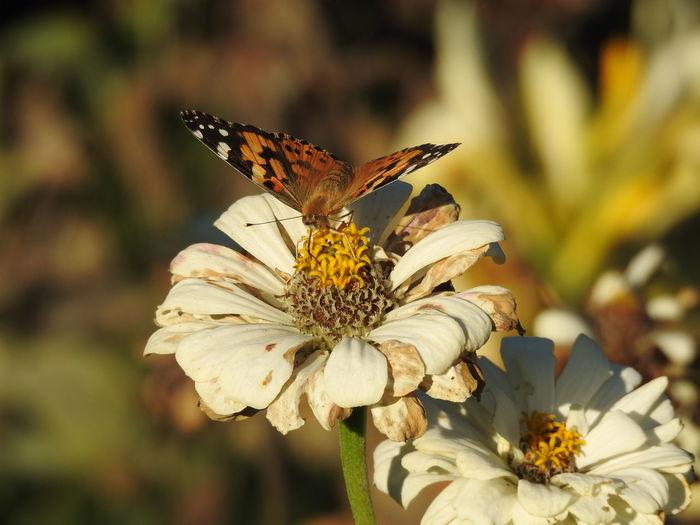 Pollen Animal