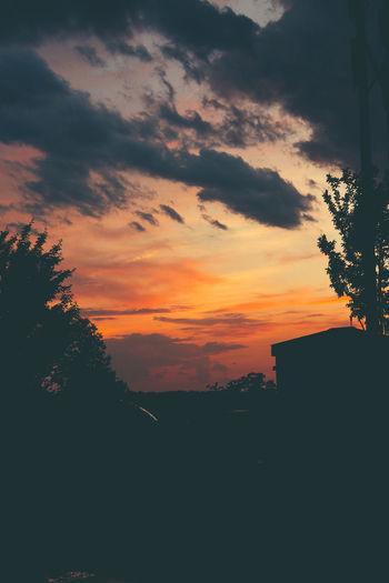 The great sunset. Sky Photography Silhouette Tree Sunset Dramatic Sky Cloud - Sky Landscape Romantic Sky Atmospheric Mood Moody Sky Atmosphere Sky Only Cumulus Cloud Cloudscape