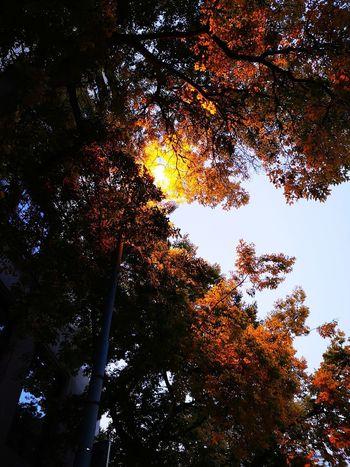 Autumn light... Tree Branch Sky Leaves Fall Autumn Autumn Collection