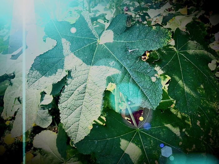 Light Light And Shadow Leaf Plant Part No People Close-up Plant Nature Growth Wet Spider Web Fragility Outdoors Backgrounds Leaves Full Frame Beauty In Nature Drop Water Green Color Day