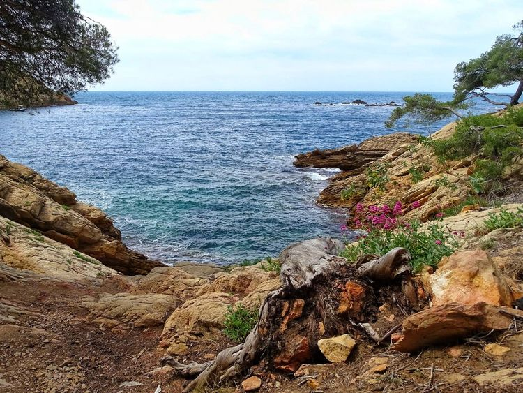 Sea Beach Horizon Over Water Sky Water Tree Nature Sand Scenics Outdoors Beauty In Nature Growth Day Tranquility No People Blue Water Blue Sky Blue Sea Marseille, France Marseillecartepostale📮 Bord De Mer Mediterranean Landscape Mediterranean Nature Mediterraneecartepostale Eyeemphotography Canon_photos