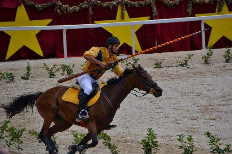 Horse Horseback Riding Riding Jockey One Animal Motion Working Animal Full Length Horse Racing Capturing Motion Sulmona Abruzzo - Italy Giostra Cavalleresca Sulmona Palio