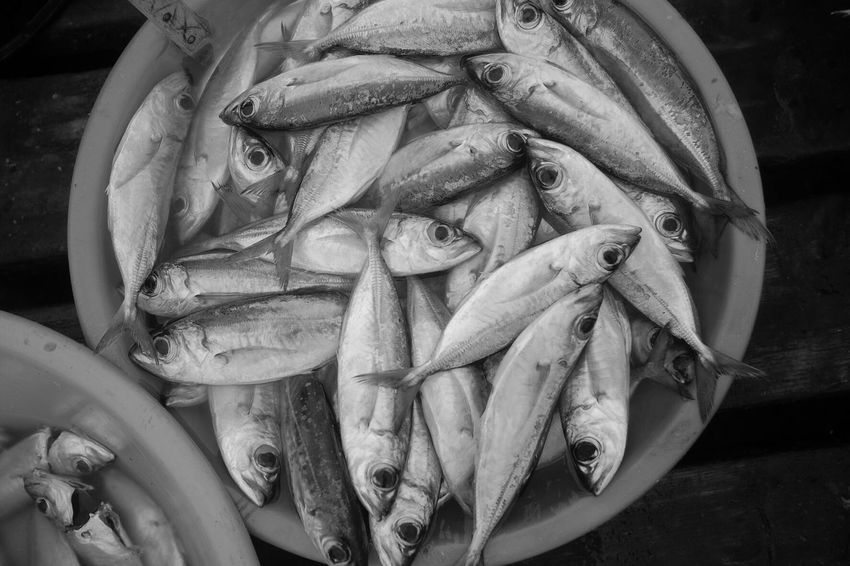 Fish market Cabo Verde Food And Drink Food Freshness Seafood Healthy Eating Fish Wellbeing No People Still Life Market Raw Food Close-up