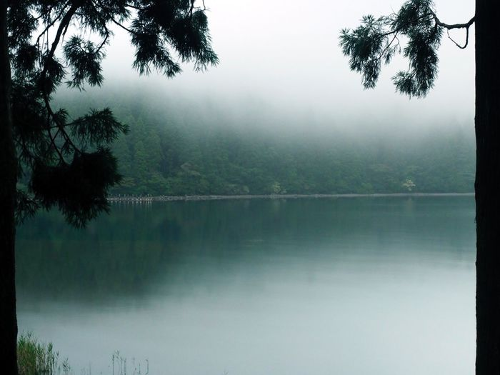 Foggy morning Simple Quiet Love Japan M.ZUIKO DIGITAL OM-D E-M5 MarkⅡ Olympus Reflection Long Exposure Forest EyeEm Nature Lover Scenics Fog Silhouette Green Color No People Outdoors Tranquil Scene Tranquility Tree Lake Water Beauty In Nature Nature