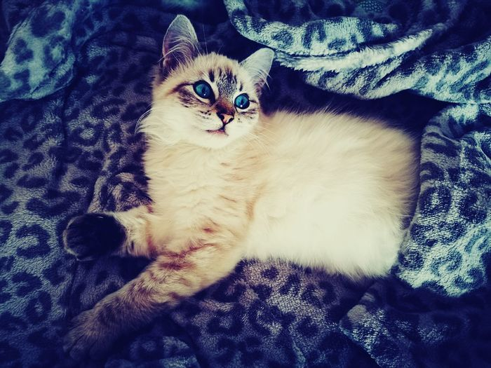 Mybabycat Cat Lovers Dóris🐱 Feline Domestic Cat Relaxtime Princess