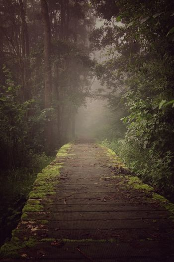 Forest Nature No People Outdoors Beauty In Nature Fog Morning WoodLand Wilderness Area Trough The Trees Canon 70d Forest Photography ForTheLoveOfPhotography Canonphotography Eos70d Trough The Lens EyeEmNewHere Canon_photos Canon EOS 70D The Week On EyeEm EyeEm Selects Loving Nature Hazy Days Wildlife Breathing Space