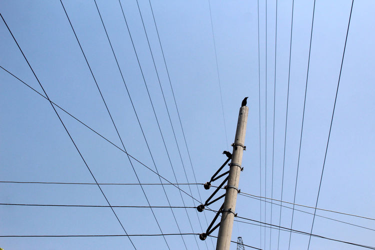Cable Electricity  Low Angle View Sky Power Line  Fuel And Power Generation Technology Power Supply Connection Electricity Pylon No People Clear Sky Nature Blue Day Outdoors Pole Electrical Equipment Bird Crow