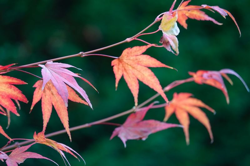 EyeEm Selects Plant Part Leaf Plant Close-up Growth Focus On Foreground Beauty In Nature Autumn Nature No People Change Orange Color Branch Tree Tranquility Vulnerability  Leaves Fragility Outdoors Day