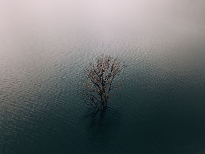 High Angle View Of Bare Tree In Lake