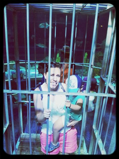 In a shark cage Trapped Feeling Trapped Sharkbait