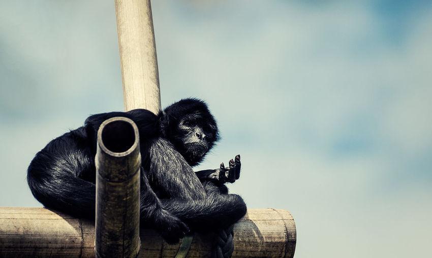 Close-up of monkey sitting on wood against sky