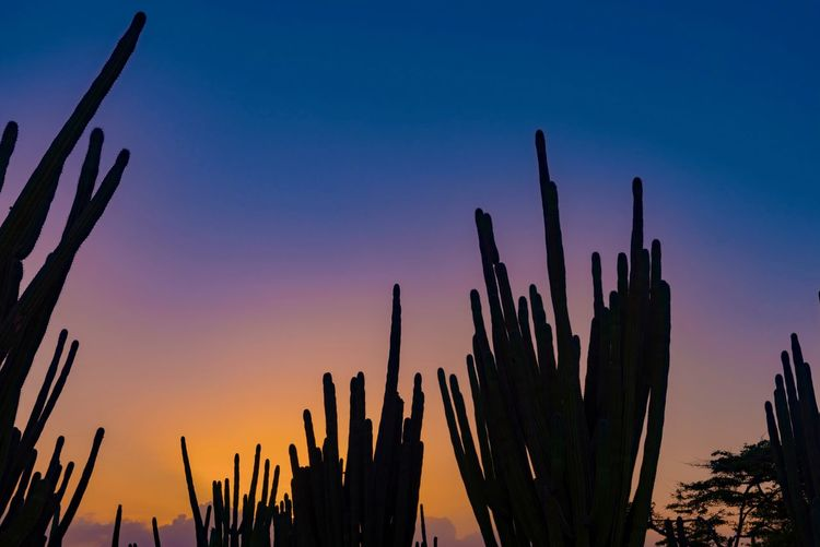 Beauty In Nature Cactus Caribbean Close-up Day Growth Nature No People Outdoors Plant Saguaro Cactus Sky Sunset