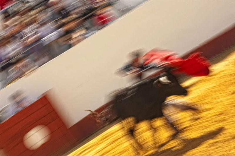Bull Bullfighting Arena Motion Blur Motion Shot MotionCapture MotionShot Picture In Motion Blurred Motion Bullfight Bullfight Arena Bullfighter Bullfighter Outfit Bullfighting Bullfights Bullfights Stadium Motion Motion Blurred Motion Capture Motion Photography Motion Picture Motionblur Motionphotography Panning Panningphotography Speed
