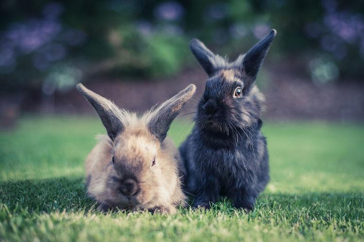 Portrait of rabbits on field