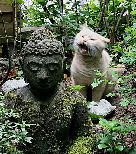 Meow 🐱 where is my peace of mind? Cats Of EyeEm Garden Cat Representation Plant Sculpture Day Art And Craft Human Representation Statue Mammal Mouth Nature Outdoors Mouth Open Growth The Still Life Photographer - 2018 EyeEm Awards