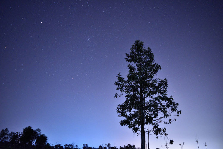 Astronomy Clear Sky Leaf Nature Night Shadow Sky Star Star - Space Star Field Tree