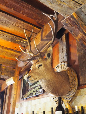 Animal Close-up Dead Animal Deer Hanged Hunting Trophy No People Remote Location Taxidermy Warm Inside Winter Wood Wood - Material Wooden Woods