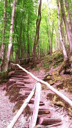 Steps Wood Woodstep Treppe Treppengeländer Treppensteigen Treppenstufen Urban Spring Fever
