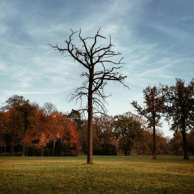Potsdam Walking Around Herbst Autumn Dead Tree