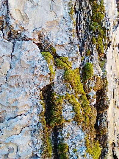 EyeEm Nature Lover Somerset California Mossy Tree Camp Fleming In The Forest NatureAtItsFinest Treehugger Soaking Up The Sun