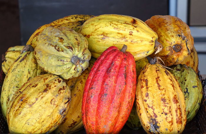 Organic cacao pods for making dark chocolate Agriculture Cacao Pods Chocolate Making Tropical Fruits Bean Pod Cacao Fruit Cocoa Beans Cocoa Fruits Food Organic Food Raw Food