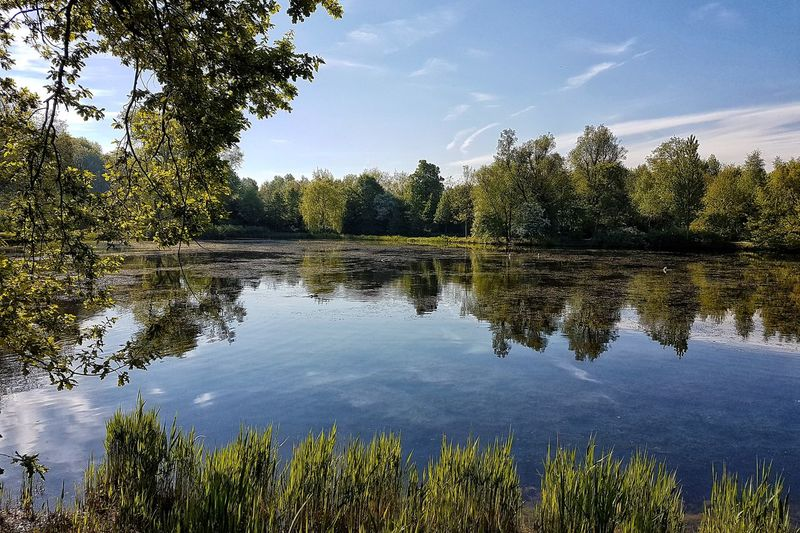 a wonderful place in my area.... Fotography Foto Eye4photography  EyeEm Nature Lover Tree Water Lake Reflection Sky Cloud - Sky Idyllic