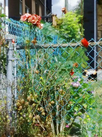 My Beautiful Garden My Garden Flower Shadows Of Flowers Long Ago,