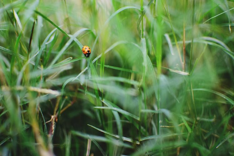 Close-up of ladybug on grass