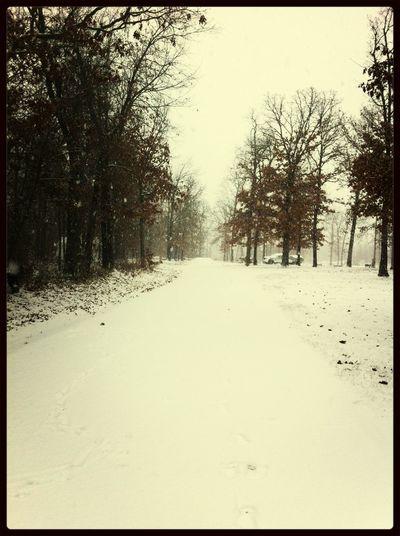 Snow!!!☺️❄️