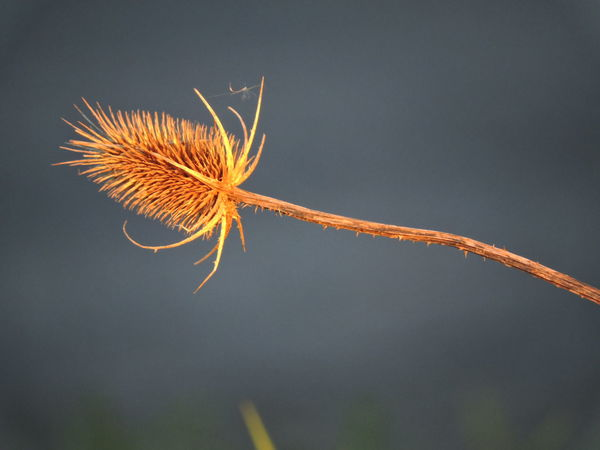 Beauty In Nature Close-up Low Angle View Nature Night No People Outdoors Seedhead Seedhead In The Sunshine Sky Sunlit