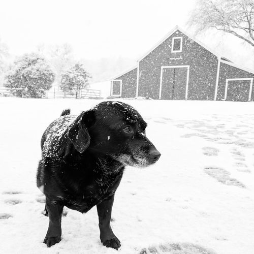Pets Dog House Building Exterior Settlement Residential Building Exterior Detached House Snow Covered Townhouse